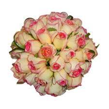 Resultado de imagem para imagem de rosas