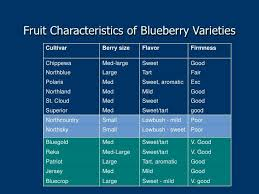 Fruit Characteristics Of Blueberry Varieties Cultivar Berry