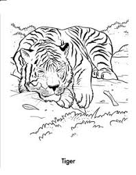Small Picture Realistic And Detailed Coloring Page Of Tiger For Older Kids