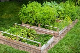 garden beds. raised garden beds from lawn