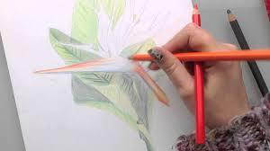 Dessin De Crayon En Couleur Superbe Mod Le Apprendre Dessiner Fleur