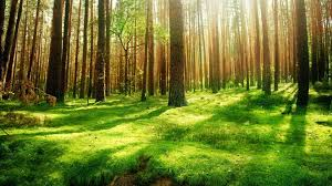 Forest Background Forest Background Wallpaper 1920x1080