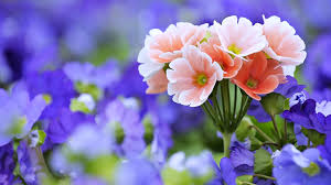 hd photos flowers.  Photos HD Wallpaper  Background Image ID594870 And Hd Photos Flowers U