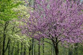 the best flowering trees in the spring