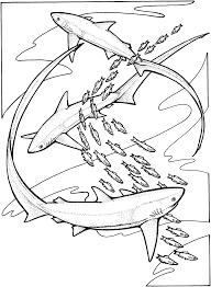 Requin 32 Animaux Coloriages Imprimer