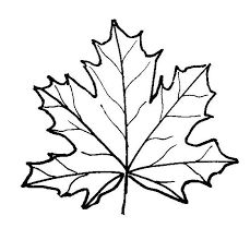 Small Picture Leaf coloring pages