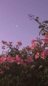Sky, Pink, Flower, Tree, Atmospheric ...