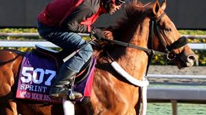 Thoroughbred Christmas Lights 2018 Dubai World Cup Carnival Notes Tuesday January 16 2018