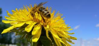 Abeilles domestiques: stabilité des pertes hivernales en Suisse, toujours  plus de ruches en Europe - Protecteurs-des-plantes