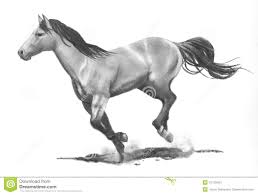 running horse drawing. Interesting Drawing Download Pencil Drawing Of Running Horse Stock Illustration   Of Pencil Racing 12109504 And D