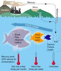 The Smart Seafood Buying Guide Nrdc
