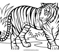 Coloring Pages Tiger Tiger Coloring Pages Printable Tiger Color Page