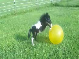 white baby horses playing. Delighful Playing Adorable  And White Baby Horses Playing A