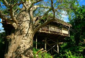 Tree House Hotels On The West CoastTreehouse Hotel Africa