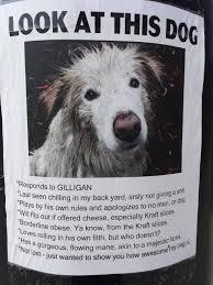 Lost Pet Flyer Maker Found on a pole in Breckenridge CO Imgur 47