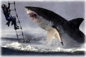 great white shark jumping at a helicopter during training. Delighful Great 4  It Has Been Nominated By National Geographic As  To Great White Shark Jumping At A Helicopter During Training T