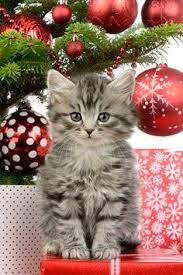 Cat Themed Christmas Tree