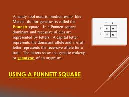 a handy tool used to predict results like mendel did for genetics is called the punnett