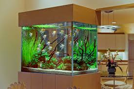 decoration: Stunning Interior House Decoration Idea With Cool Aquarioums  Design With Visible Glass Material Also