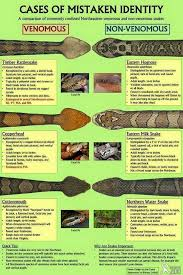 U S Guide To Venomous Snakes And Their Mimics Common