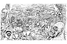 Jungle Foret Animaux Jungle Et For T Coloriages Difficiles Pour