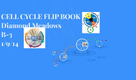 cell cycle flip book cell cycle flip book by diamond meadows on prezi