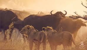 Guided Safaris® Big Cat Eco-Luxury - Luxury Safari Lodges