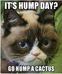 Image result for Hump day cat