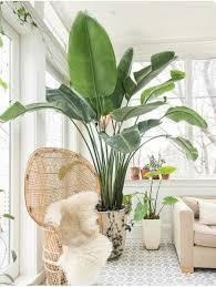 Top 5 Indoor Plants of 2016