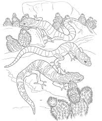 Small Picture Coloring Book Desert Animals Coloring Pages