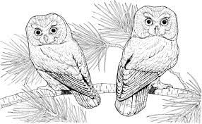 Small Picture Flying Owl Coloring Pages Printable Kids Colouring Pages