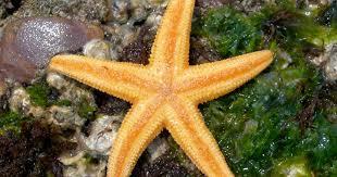 essay on starfish essay about starfish