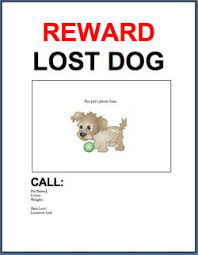 Missing Cat Poster Template Adopt A Pet Com Blog Free Template Lost Or Found Pet Flyer Adopt