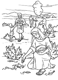 Small Picture manna and quail coloring page Google Search bible color pages