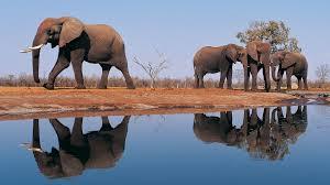 Desktop Background Hd Elephant ...