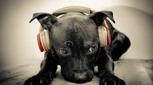 1920x1080 headphones, face, music ...