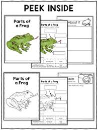 Parts Of A Frog Parts Of A Frog Activities By Nicole And Eliceo Tpt