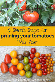 how to prune your tomato plants like an