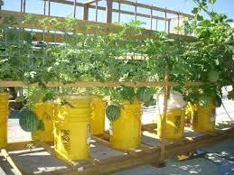 bucket gardening. Bucket Gardening Rooftop Garden Container Self Watering