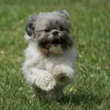 small hunting dogs that don t shed breed dogs picture