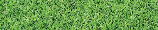 garden ground cover. Ground Cover It\u0027s An Old Favourite, Plants Are Low Maintenance And Ideal For Suppressing Weeds In Your Garden. Garden