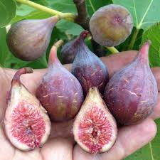 Mystery Fig Number One Can You Identify This Fig Variety