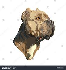 Royalty Free Stock Illustration Of Pitbull Portrait Stock