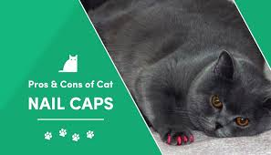 cat nail caps what are the pros cons