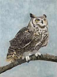 Great Horned Owl - Bubo virginianus | Artists for Conservation