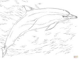 Small Picture Common Dolphin coloring page Free Printable Coloring Pages