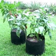 Smart Pot Sizes Instant Nursery Festivaldelamor Co