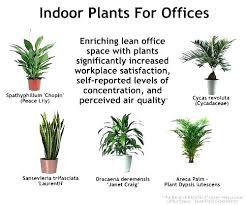 best indoor office plants. Beautiful The Best Indoor Plants For Low Light Office Desk  . Idea I