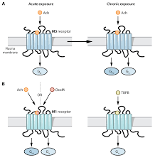 Gpcr Signaling Fingerprinting G Protein Coupled Receptor Signaling