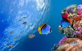 freshwater wallpaper. Beautiful Freshwater Freshwater Tropical Fish HD Wallpaper Wallpaper Hd Wallpapers 1920x1200 In